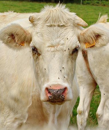 Production de viandes, poissons et produits laitiers dans la région de Stavelot Malmedy